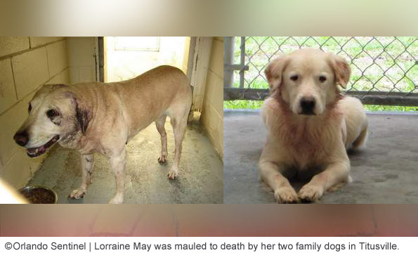 Lorraine may killed by dogs titusville