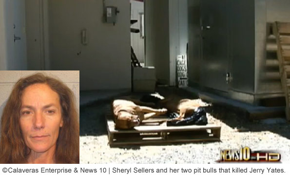 sheryl sellers and her pit bull that killed jerry yates