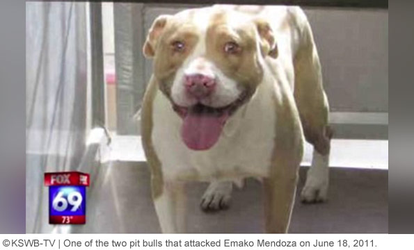 pit bull that attacked emako