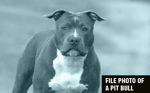 Pit bull kills owner baker city, orgeon