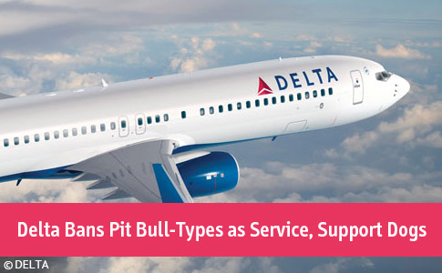 Delta bans pit bull-type dogs as service, support dogs