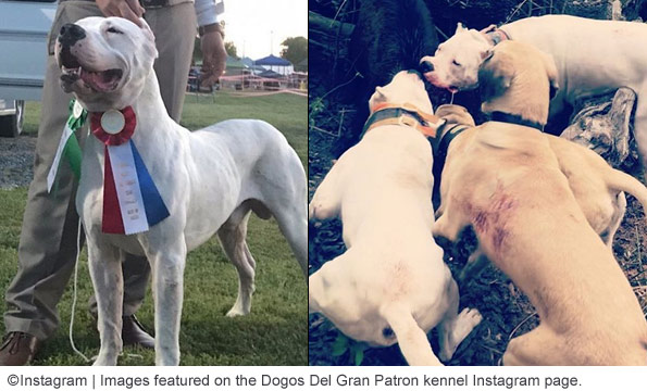 2018 Dog Bite Fatality: Back-to-Back Dogo Argentino Attacks, One