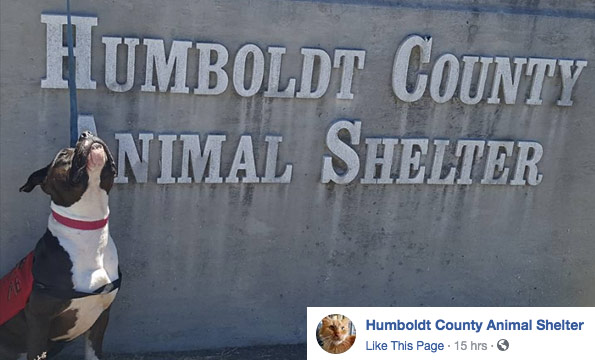 after rampaging attack, shelter promotes pit bull