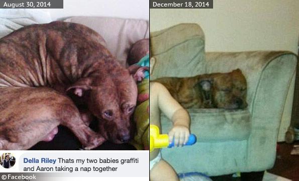 complex investigation pit bulls kills price hill woman