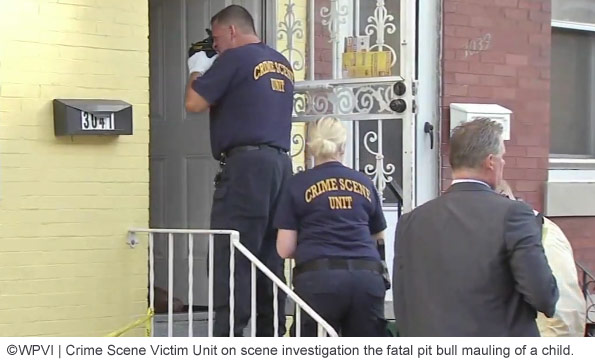pit bulls kill toddler port richmond Philadelphia