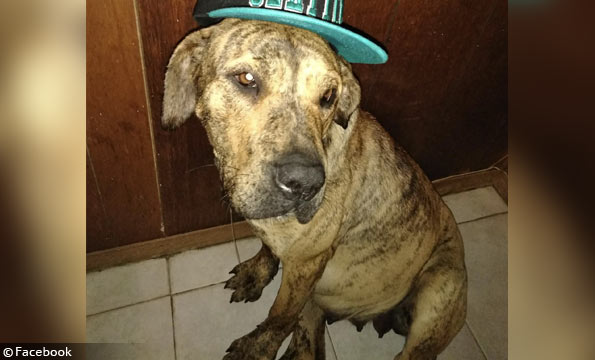 Mastiff in victim's facebook album
