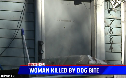 wheelchair bound woman pit bull kills