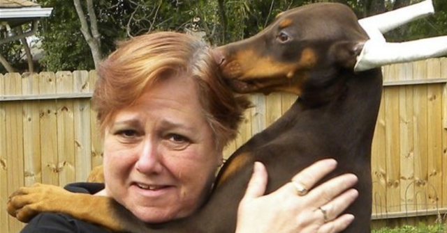 2019 Dog Bite Fatality Owner Of Doberman Pinscher Show Dogs Found Dead With Multiple Dog Bite Injuries Dogsbite Blog