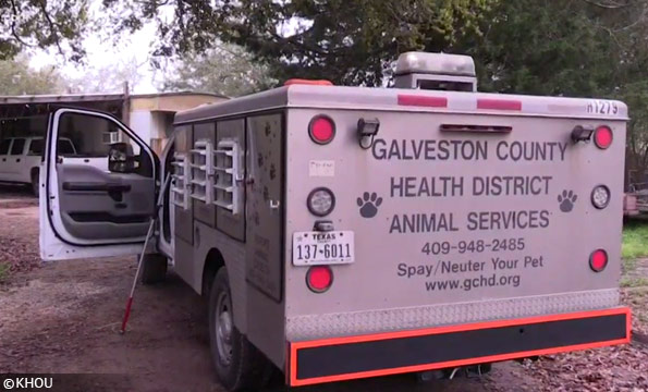 Galveston county dog attack