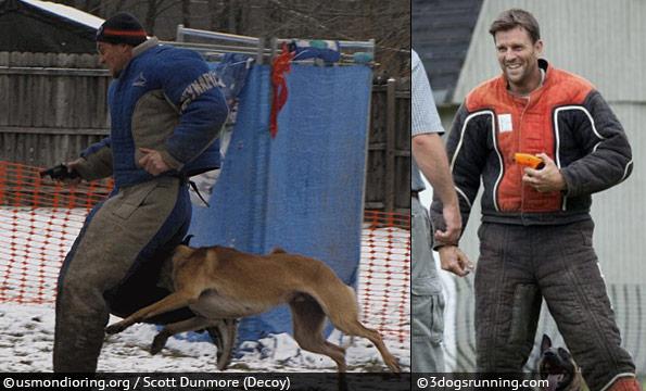 dighton dog attack - -scott dunmore dog training