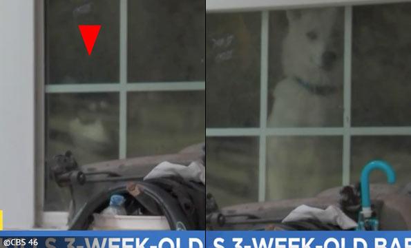 sleeping infant killed by husky-mix