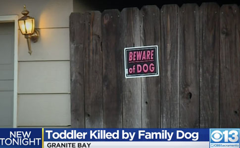 family pit bull kills baby granite bay