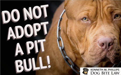 pit bull adoption disaster