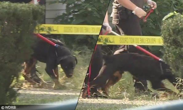 rottweilers kill boy louisville