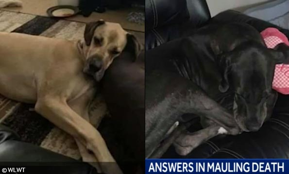 rescue great danes kill owner in ohio