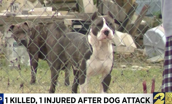 north houston dog attack