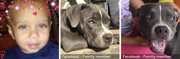 Ashton McGhee fatal pit bull attack, breed identification photograph