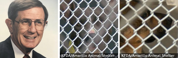 Ed Stanley fatal pit bull attack, breed identification photograph