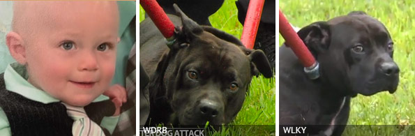 Isaiah Geiling fatal pit bull attack, breed identification photograph