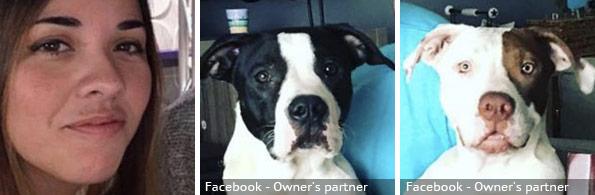 Johana Villafane fatal pit bull attack, breed identification photograph