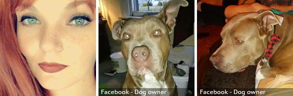 Morgan Crayton fatal pit bull attack, breed identification photograph