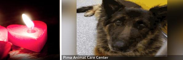 Patricia Henson fatal dog attack, breed identification photograph