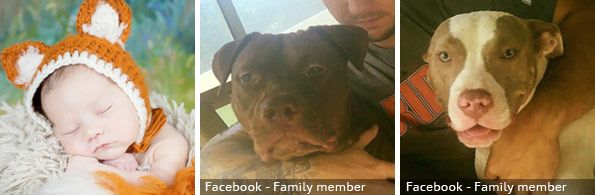 Tanner Kinnamon fatal pit bull attack, breed identification photograph