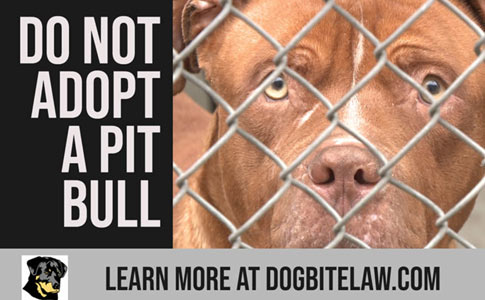 do not adopt a pit bull during coronavirus