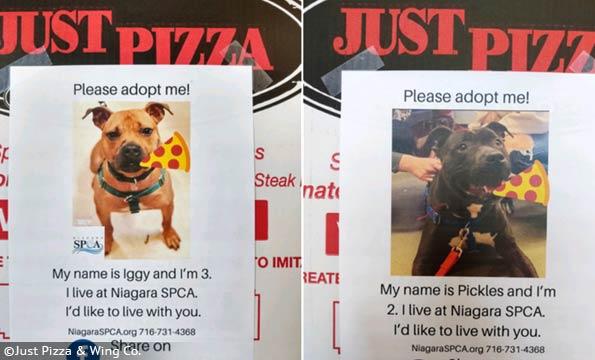 pizza box pit bull advertisements