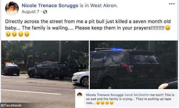 pit bull kills akron