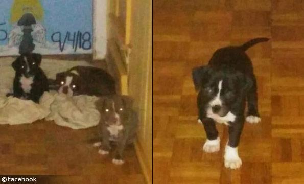 Dogs that killed Doris Arrington