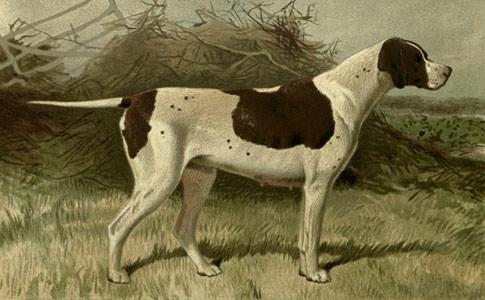 Vintage pointer dog - sensible dog people