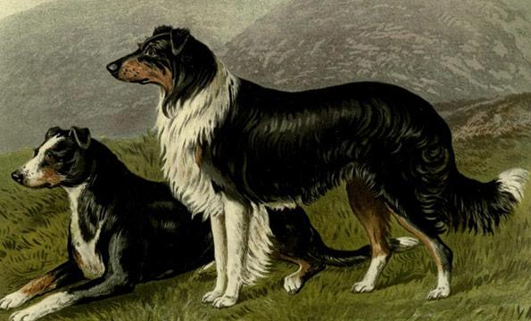 vintage sheep dog - sensible dog people