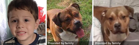 Benjamin Cobb fatal pit bull attack - breed identification photograph