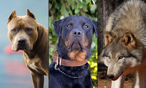 Status Update - NDAA banned dog breeds