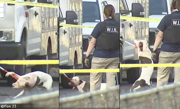 Tulsa pit bull mauling