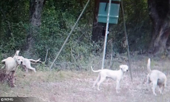 rural jackson county dog attack