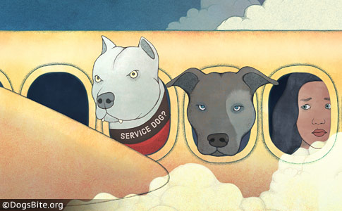 DOT final rule traveling by air with service animals