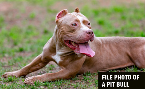 Former Owner of Rescue Pit Bull