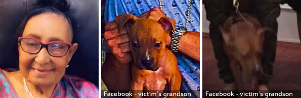 Coco Portes Morilla fatal pit bull attack, 2020 breed identification photograph