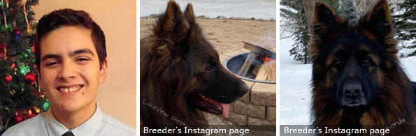 Dion Bush fatal German shepherd attack, 2020 breed identification photograph