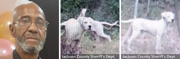 Donald Allen fatal pit bull attack, 2020 breed identification photograph