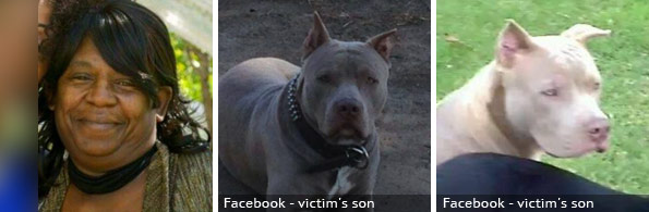 Geraldine Hamlin fatal pit bull attack, 2020 breed identification photograph