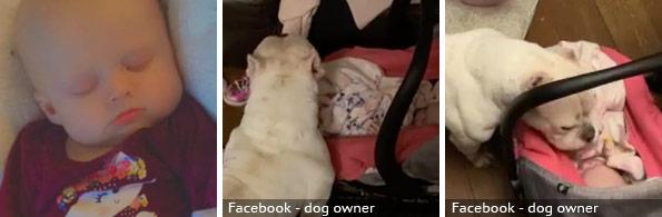 Raelynn Larrison fatal pit bull attack, 2020 breed identification photograph