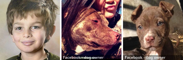 Robert Taylor fatal pit bull attack, 2020 breed identification photograph