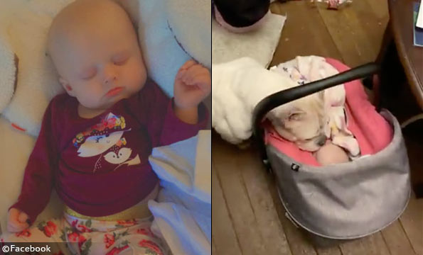 dog on top of baby, smothers baby