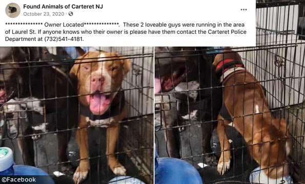 violent dog attack carteret