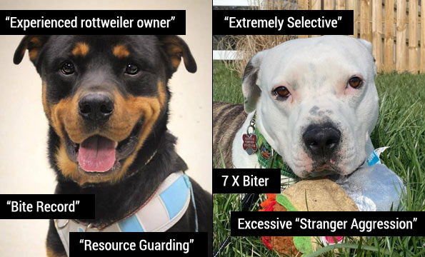 major liability dogs - shelter terms