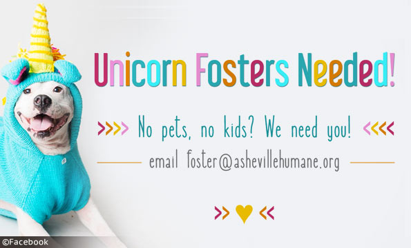unicorn fosters - major liability dogs