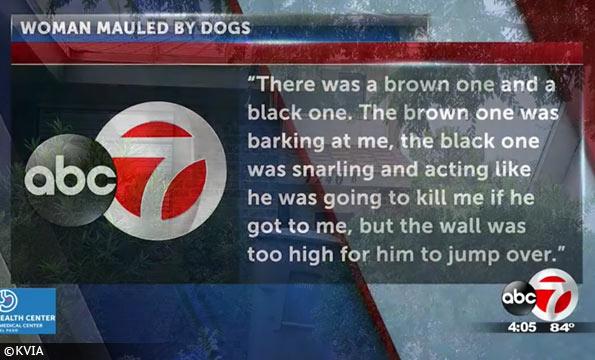 pair of pit bulls el paso kills woman